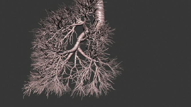 Modélisation multi-échelles des poumons