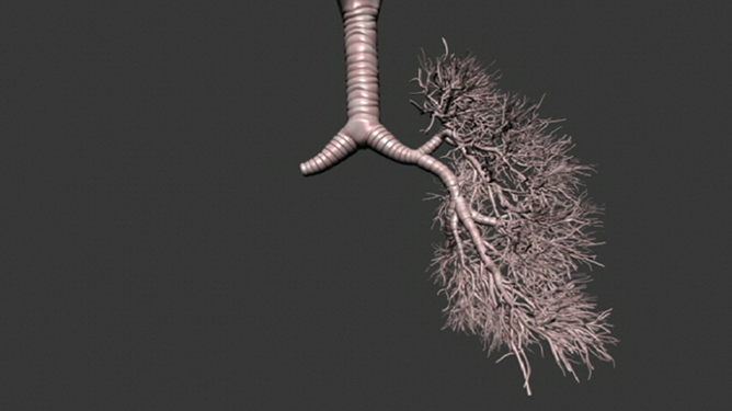 Multiscale modeling of the lungs